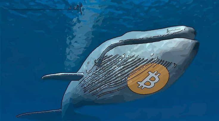 Paus Bitcoin Beli 60,000 BTC Hanya Dalam Waktu Satu Hari